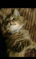 Котёнок, Губкин