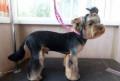 Стол для стрижки животных с держателем, Липецк