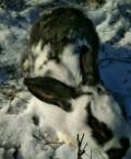 Кролики, Эндирей