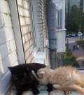 Отдадим в хорошие руки кошку 1, 5 года, Усть-Кинельский