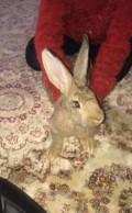 Кролики, Кочубей
