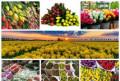 Тюльпаны к 8 марта в Тюмени от производителя, Тюмень