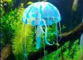 Украшение для аквариума, Артем