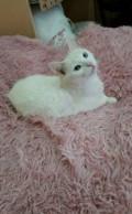 Кошка, Чебоксары