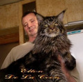 Маленькая рысь с характером ласкового котенка, Краснодар