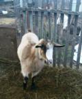 Молодая козачка, Семикаракорск