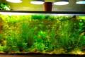 Аквариумные растения, Пенза