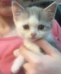 Отдам даром котенка(мальчик) кушает все домашнее, п, Скопин