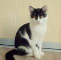 Лемура, стерилизованнная, 9 месяцев, Актюбинский
