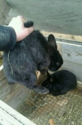 Кролики, Каспийск