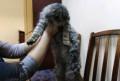 Кошку в добрые руки, Никологоры