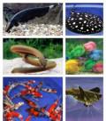 Аквариумы и рыбки в зоомагазине Белая Акула, Кривянская