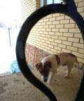 Найдена собака (кобель), Новая Ляда