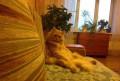 Отдам кота в добрые руки, Нижний Тагил