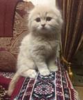 Котёнок, Таремское
