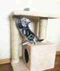 Дом для кошки, Самара