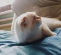 Кот для вязки, Бийск