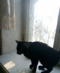 Кошки, Бийск