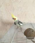Попугай Корелла с большой клеткой, Спиридоновка