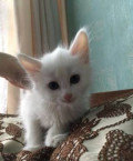 Отдам котенка Мальчик, Вельск