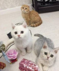 Котята-коты, Ишлеи