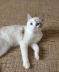 Кошка, Ханты-Мансийск