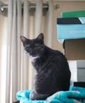 Кот привитый, Елабуга
