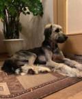 Невероятно красивая собака в поисках дома, Арск