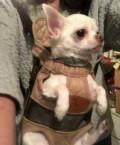 Рюкзак для переноски собак, Бердск