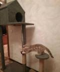 Кошкин дом, царапки, Самара