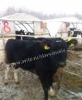Бычки телята мясные до 4 мес, Миллерово
