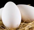 Яйцо инкубационное, Россошь