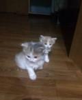 Котята в добрые руки, Отрадный