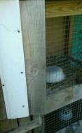 Клетки для кроликов, Бессоновка
