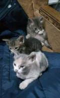 Котята в добрые руки, Минеральные Воды