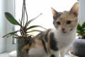 Котенок (девочка), Новоалтайск