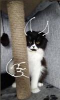 Кошка по имени Таша, Калманка
