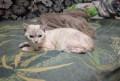 Красавица кошка, Рубцовск