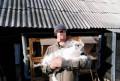 Кролики мясного направления, Чемодановка