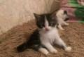 Милые котейки, Покрово-Пригородное