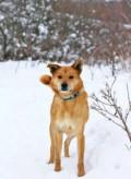 Солнечный пес для доброй семьи, Калуга
