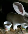 Кролики, Хасавюрт