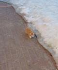 Кот, Пермь