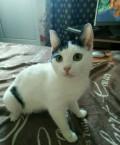 Кошечка Юми, Сургут