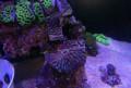 Морские кораллы для морских аквариумов, Сургут