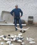 Голубь, Будённовск
