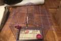 Клетка для птиц, Армизонское