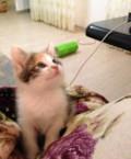 Котенок, Махачкала