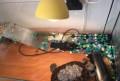 Красноухая черепаха, Верхняя Тура