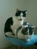 Лиза и Тиша, Гари